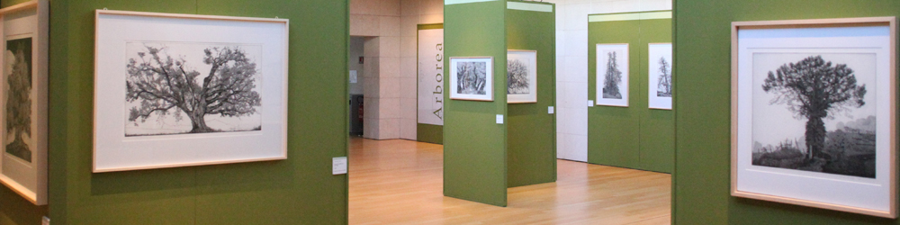 Salamon Exhibitions